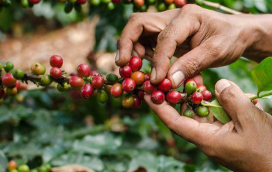 ETHICALLY SOURCED BEANS